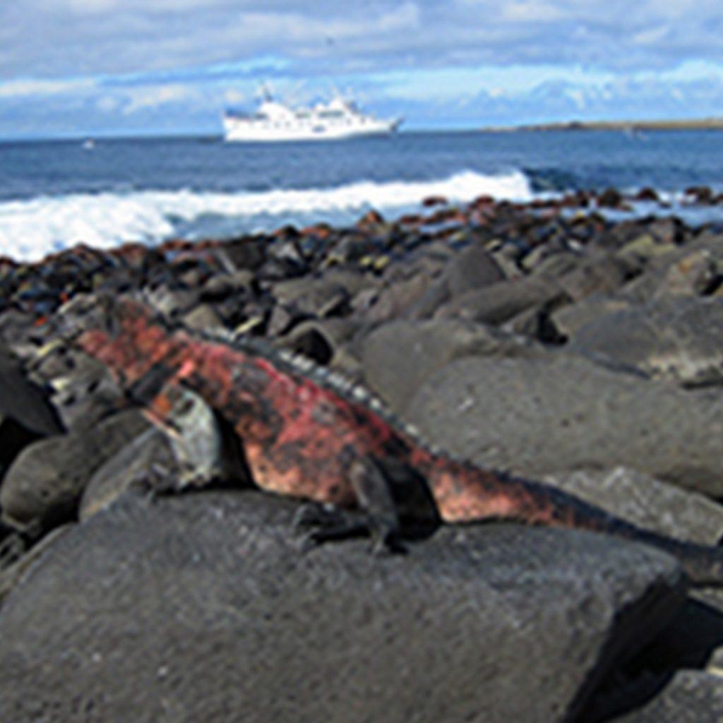 LP00004-Marine-iguana-la-pinta-view