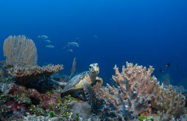 Six Senses Laamu, Maldives (22)