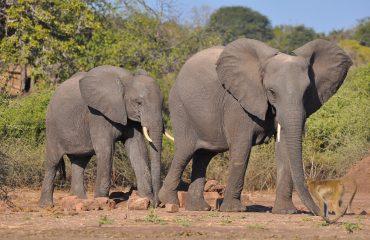 elephant-3320573