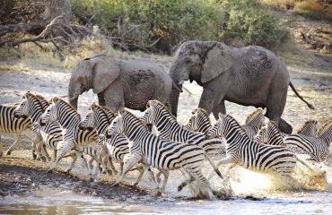 31Meno a Kwena - Zebra & Elephants