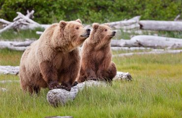 4-wyprawy-usa-bears