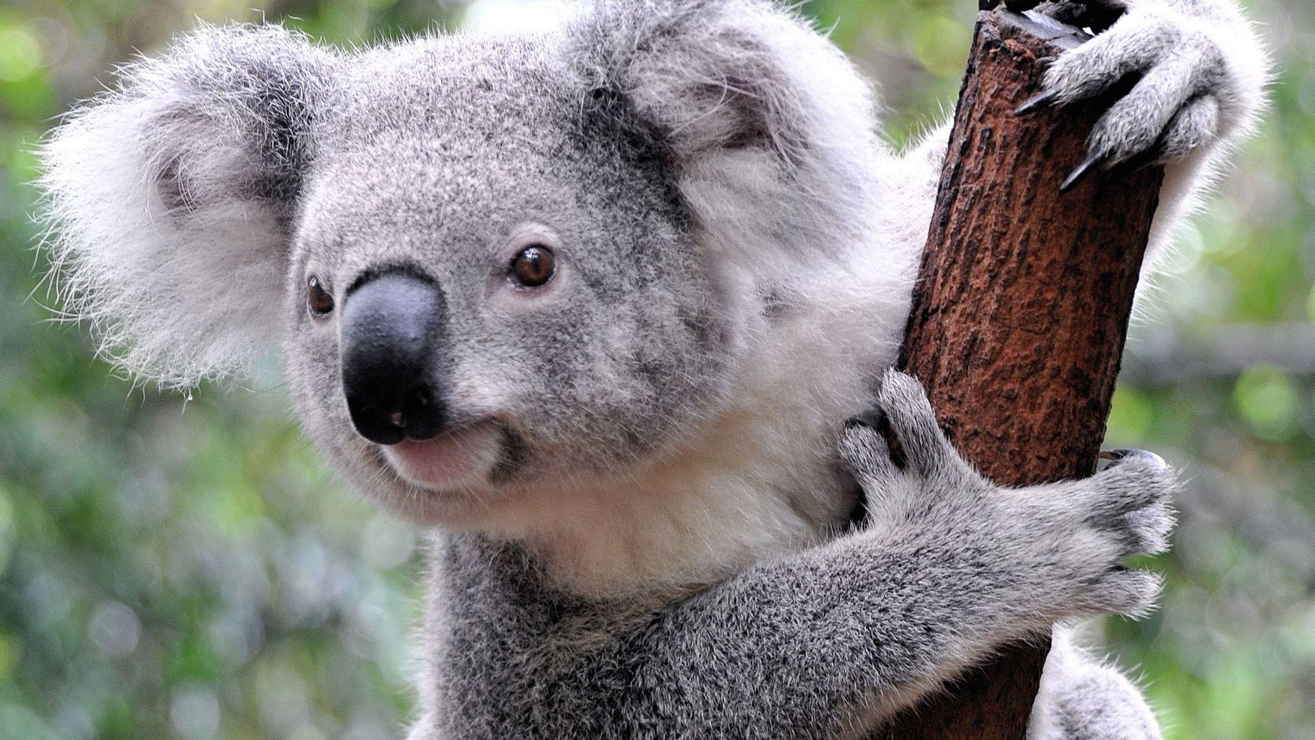 45-doln-lub-44-środek-Koala