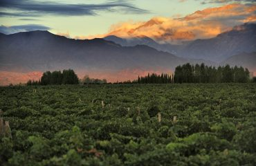Argentina-Mendoza4.jpg