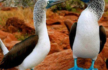Ekwador z Galapagos 04