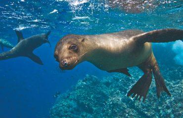 Ekwador z Galapagos 05