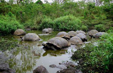 Ekwador z Galapagos 09