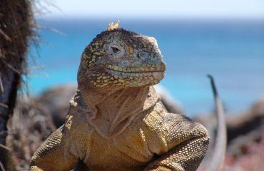 Ekwador z Galapagos 11