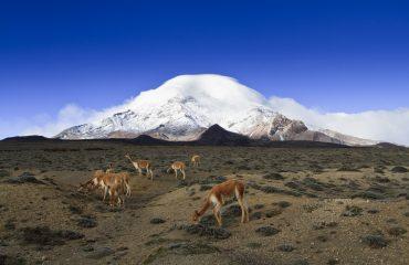 Reserva faun'stica Chimborazo