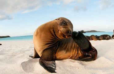 GPS91276-sea-lion