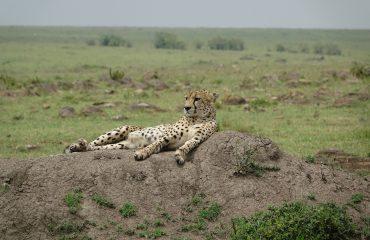 Kenia 10