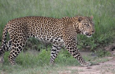 Kenia 12