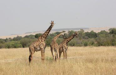 Kenia 14