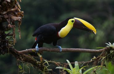 Kostaryka pxb 06
