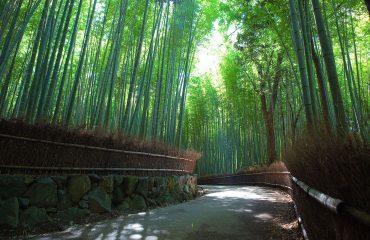Las-Bambusowy-Kioto