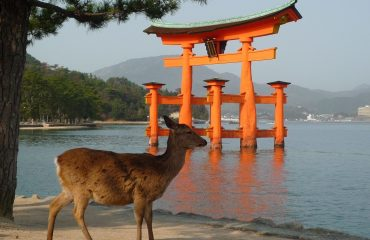 Miyajima-Floating-Tori-Deer