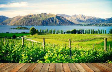 NZ-Countryside