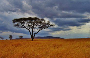 Tanzania 01