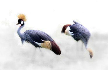 Tanzania 09