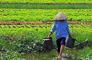 Wietnam 05