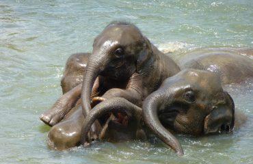 baby-elephant-256657