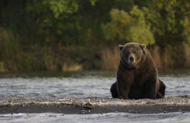 bear-2095379