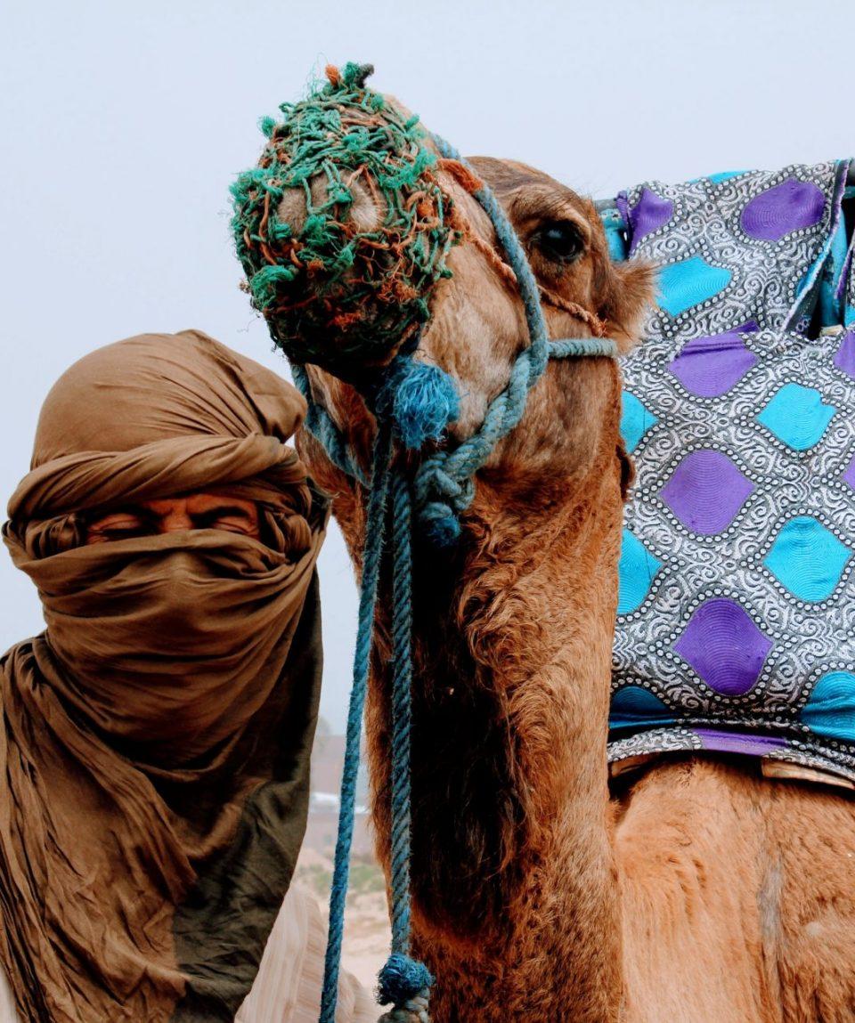 camel-2465551