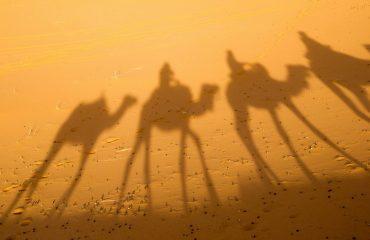camel-2482792