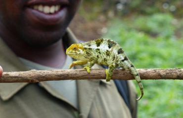 chameleon-818678