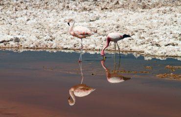 flamingos-1024548