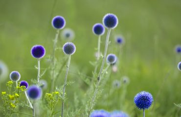 flowers-2153408