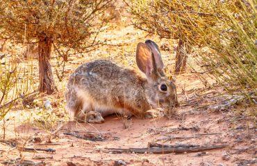 hare-1199218