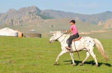 horse-2507562