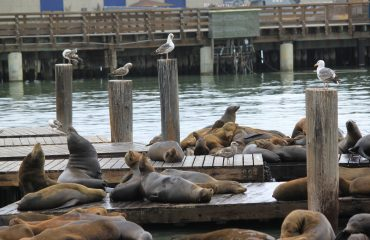 sea-lions-2421030
