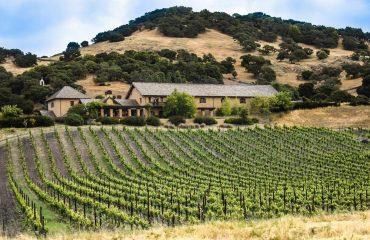vineyard-1096841
