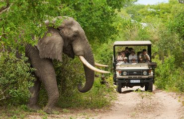 wyprawy-Kapsztad-Park-Krugera-Johannesburg-safari-Park-Krugera-11