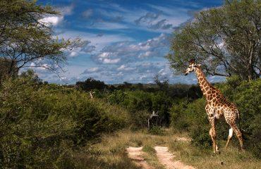 wyprawy-Kapsztad-Park-Krugera-Johannesburg-safari-Park-Krugera-20