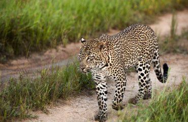 wyprawy-Kapsztad-Park-Krugera-Johannesburg-safari-Park-Krugera-21