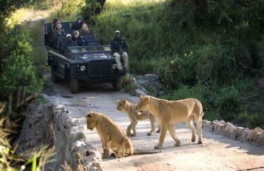 wyprawy-Kapsztad-Park-Krugera-Johannesburg-safari-Park-Krugera-23