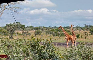 wyprawy-Kenia-a-la-Hemingway-Porini-Rhino-Camp-17