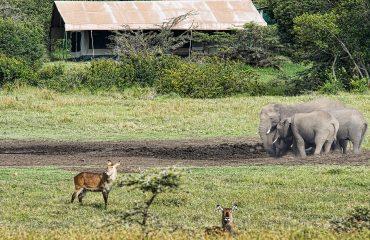 wyprawy-Kenia-a-la-Hemingway-Porini-Rhino-Camp-25