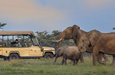 wyprawy-Kenia-a-la-Hemingway-Porini-Rhino-Camp-safari-17