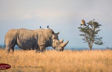 wyprawy-Kenia-a-la-Hemingway-Porini-Rhino-Camp-safari-18