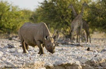 wyprawy-Namibia-z-Mozmbikiem-Little-Ongava-safari