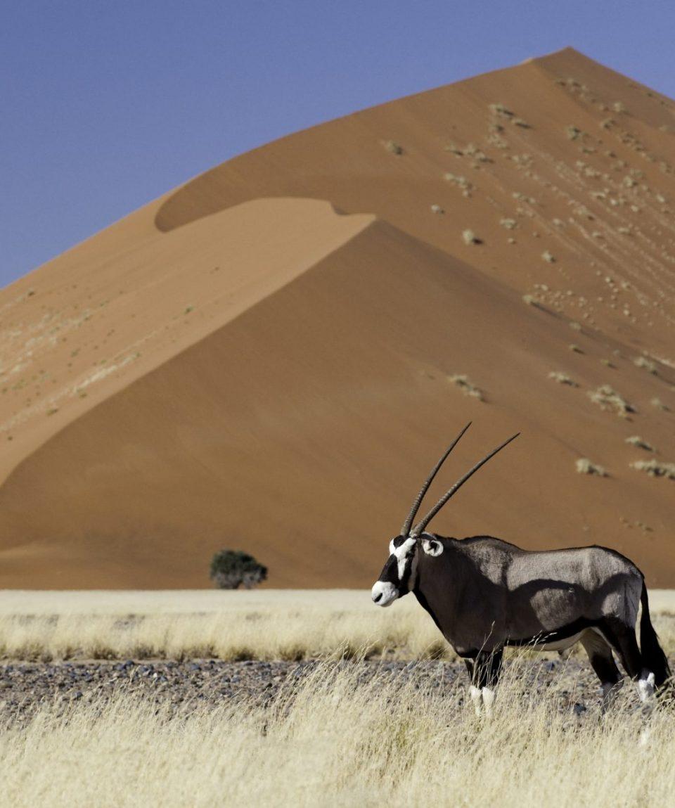 wyprawy-Namibia-z-Mozmbikiem-Sossusvlei