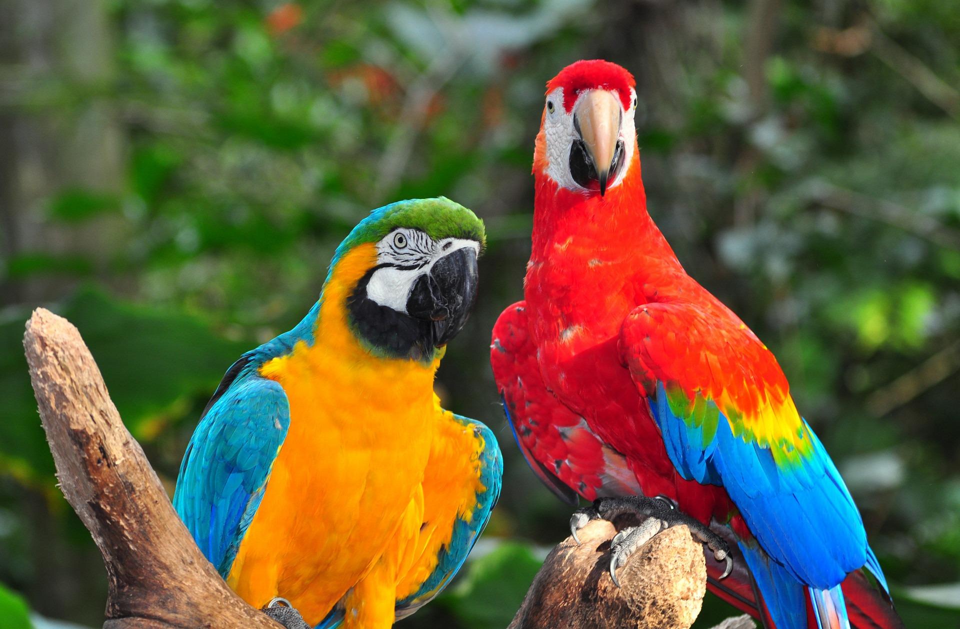 wyprawy-Perły-Ameryki-Południowej-Brazylia-Fauna-Flora-ptaki