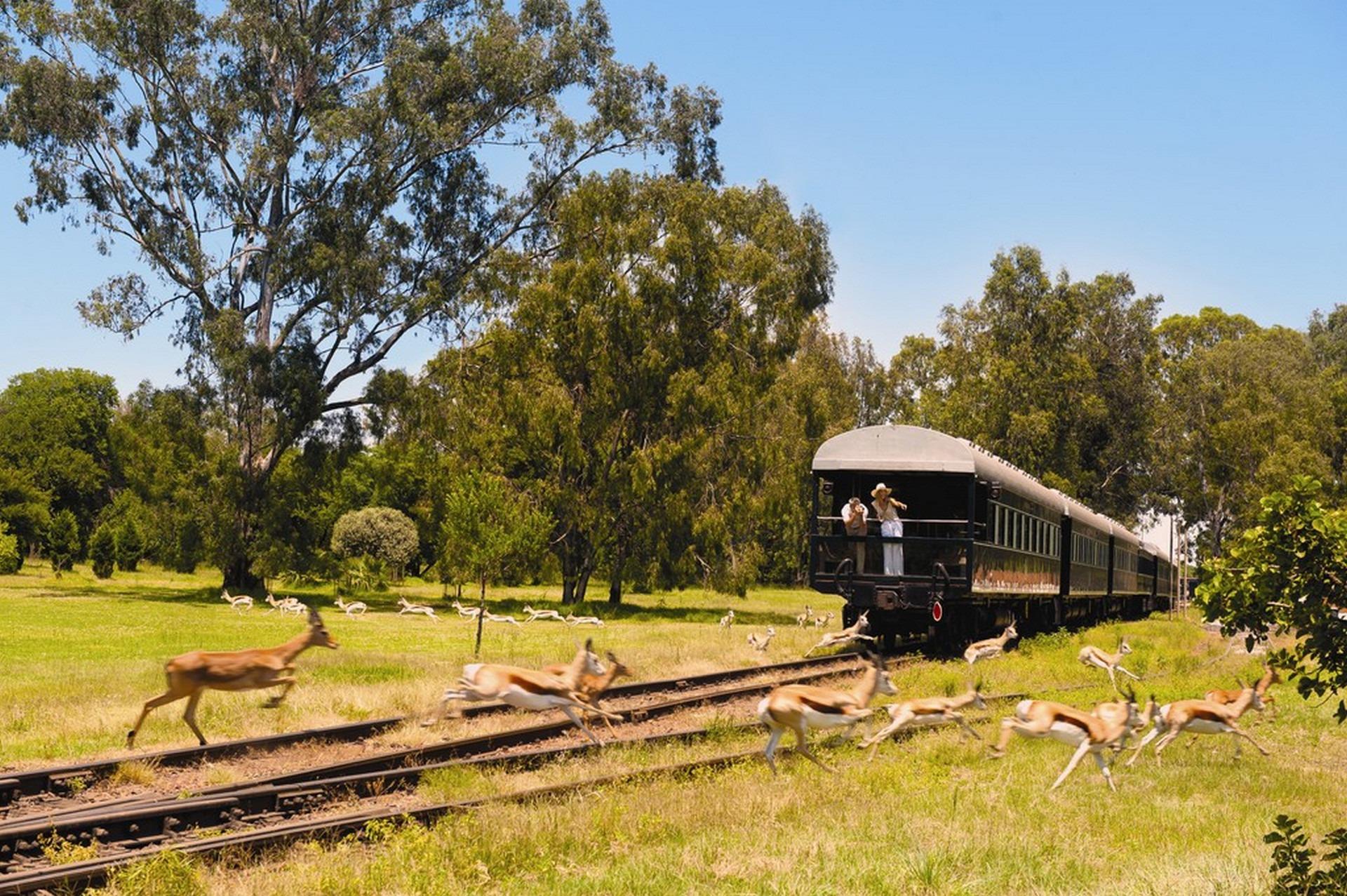 wyprawy-Splendor-Afryki-Rovos-Rail-luksusowy-pociąg