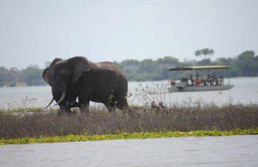 wyprawy-safari-i-wypoczynek-na-plaży-Tanzania-Siwandu-safari