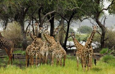 wyprawy-safari-i-wypoczynek-na-plaży-Tanzania-Siwandu-safari2