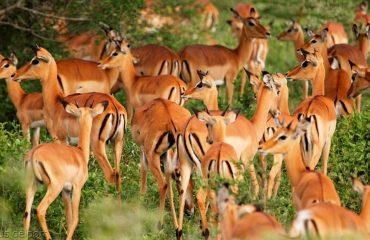 wyprawy-safari-i-wypoczynek-na-plaży-Tanzania-Siwandu-safari3