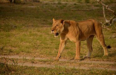 wyprawy-safari-i-wypoczynek-na-plaży-Tanzania-Siwandu-safari4